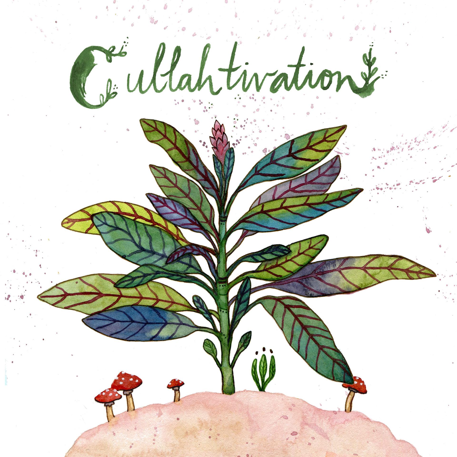 Cullahtivation Album [BONUS]